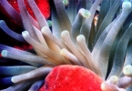 anemone_and_sponge