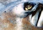 stingray_eye