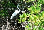 web_Sea_Elements_egret