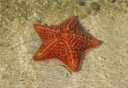 web_Sea_Elements_seastar