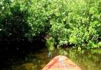 kayak_web