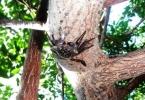 Sea_Elements_Mangrove_Tree_crab_Aratus_pisonii23