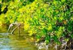 mangrove_forest