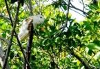 owl_crop