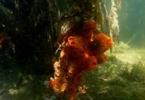 orange_sponge_mangrove