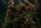 snorkel_mangrove_roots