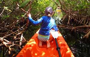 Mangrove Kayak Tour Photos